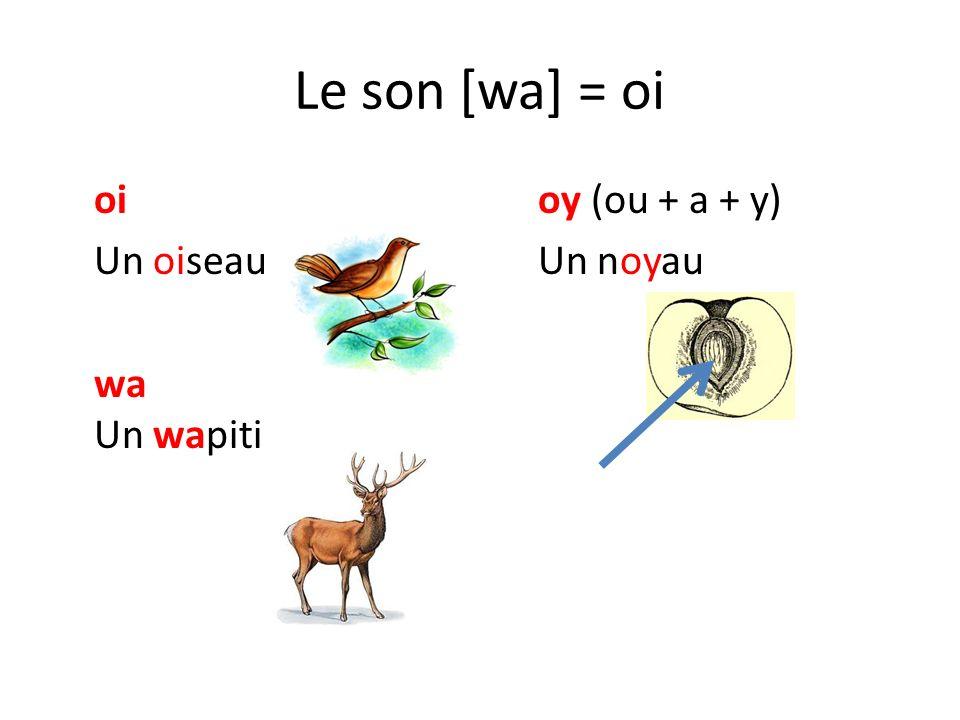 Le son [wa] = oi oi oy (ou + a + y) Un oiseau Un noyau wa Un wapiti